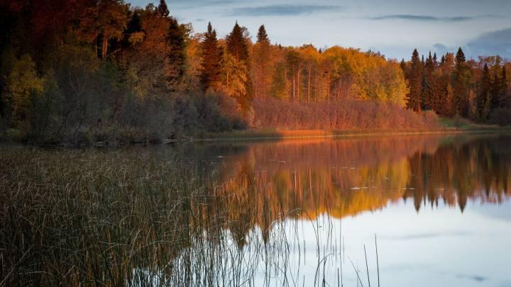 Осень, Лес, Река, Природа - обои из категории Природа, скачать на