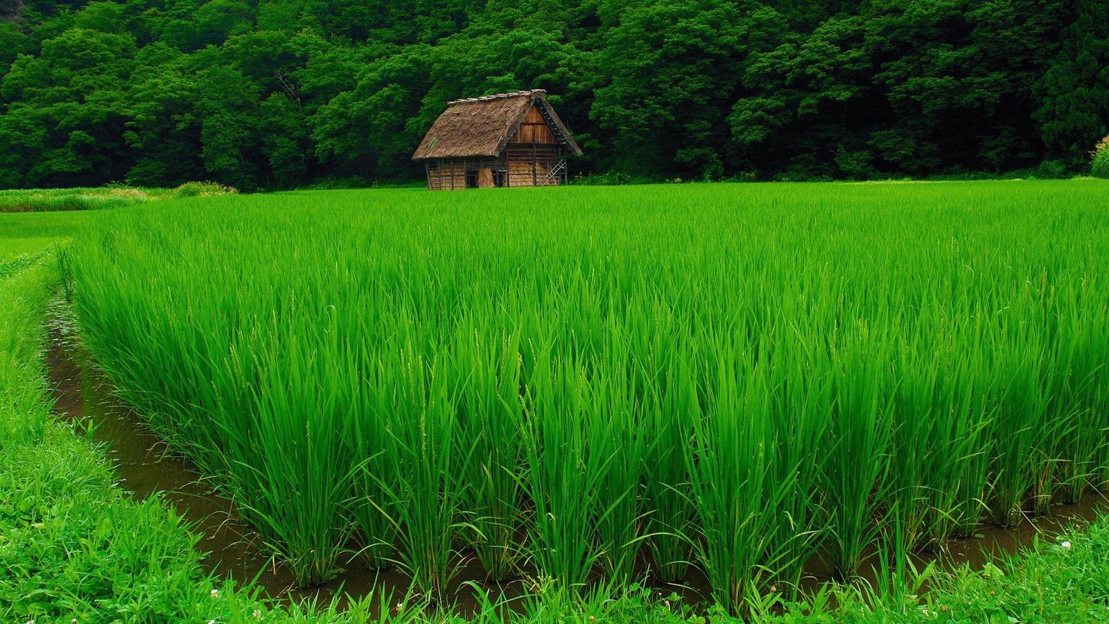 Трава хижина дом лес обои картинки