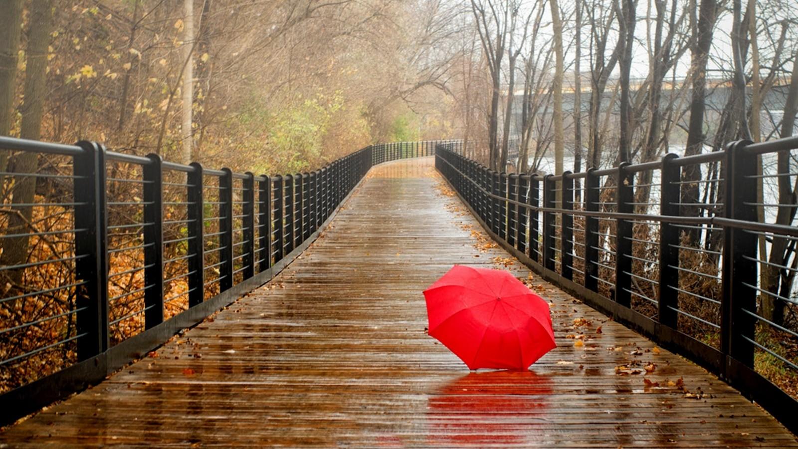 Фото золотой дощ 12 фотография