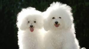 Обоев в категории собаки 45