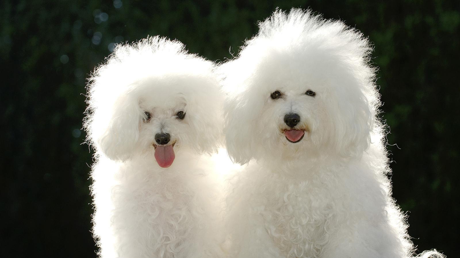 Породы собак своими руками фото