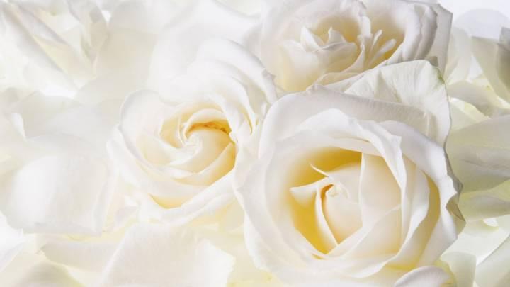 Скачать 1600х900 белые розы розы бутоны