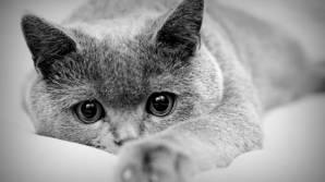Обоев в категории кошки 65