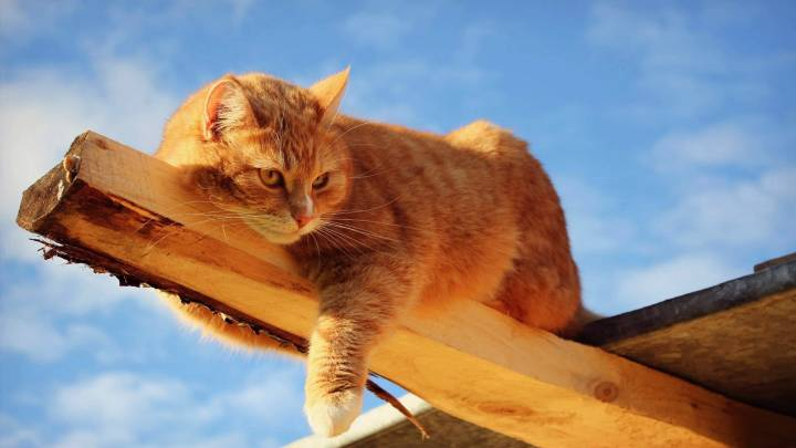 Обои картинки фото рыжий кот лежит